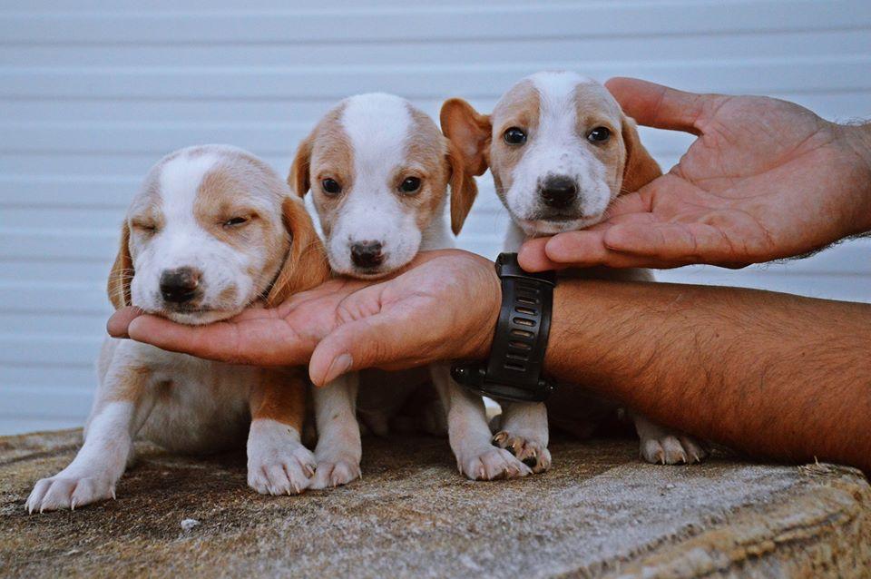 helping shelter animals