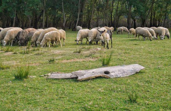 rural oasis